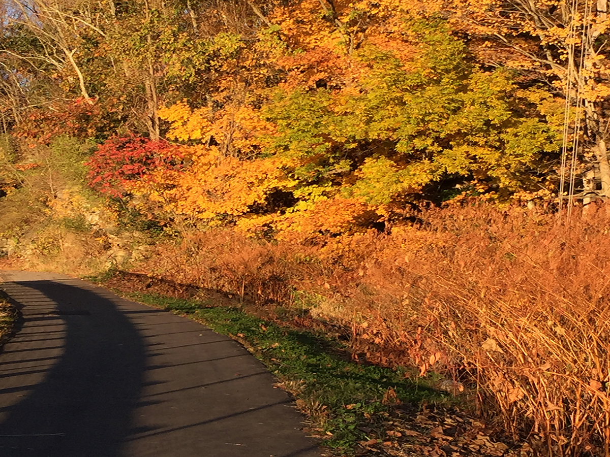 montour-trail-photo-credit-vincent-troia-10-25-2015.jpg